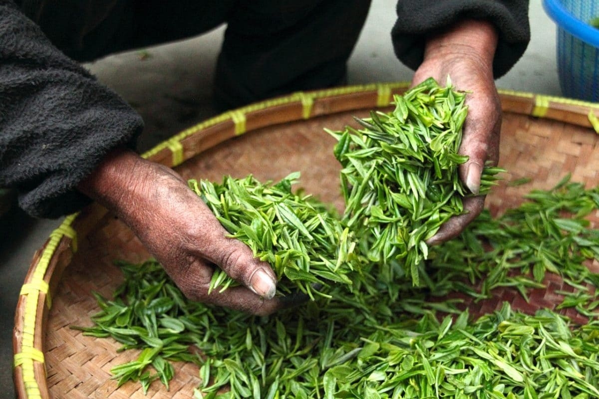 thé vert boisson brûle graisse